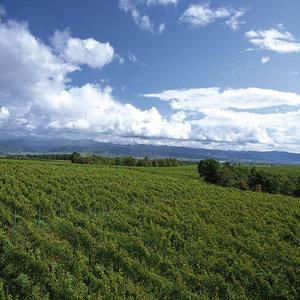 Започва прием по схемата за застраховане на селскостопанска продукция
