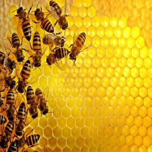 Стартира прием по Националната програма по пчеларство