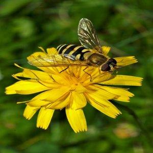Започва прием за компенсиране на селскостопански животни и унищожени пчелни кошери