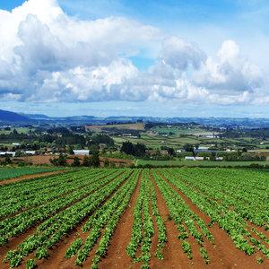"""Приемът  по мярка 4.1 """"Инвестиции в земеделски стопанства"""" от ПРСР 2014-2020 г. стартира на 14.04.2015 г."""