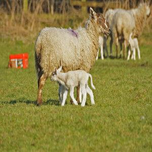 До 09.04.2015 г. е удължен срокът за заявления за de minimis  за унищожени животни