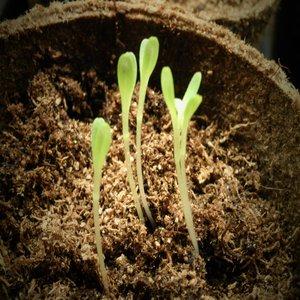 """1,5 милиона лева отпуска Държавен фонд """"Земеделие""""  насърчаване производството и използването на висококачествени семена"""
