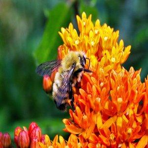 Национална програма за пчеларство 2014-2016